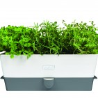 H105349 Self Watering herb Keeper Triple Dimension Shot HR